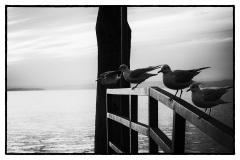 Lago di Garda 03