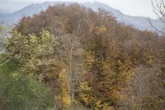 181122_w Lessinia autunno