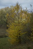 181131_w Lessinia autunno