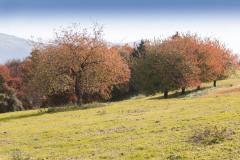 181136_w Lessinia autunno