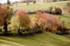 181164_w Lessinia autunno