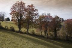 181168_w Lessinia autunno